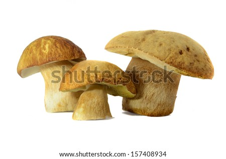 Isolated three Boletus edulis #157408934