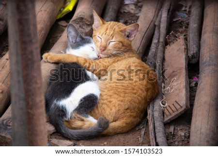 One black and white and one orange cat sleeping close together on the streets in south-east Asia. #1574103523