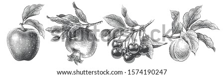 Cherries, apple, apricot and pomegranate composition set. Hand drawn engraving style illustrations. #1574190247
