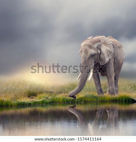 African Elephant  near water at sunset with reflection #1574411164