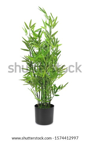 Artificial bamboo branches in a pot. Home decoration. Interior design object #1574412997