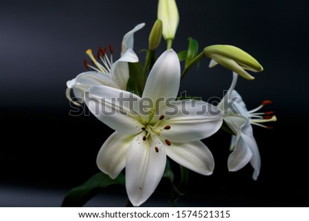 Close up of white calla lilies on a dark background. #1574521315