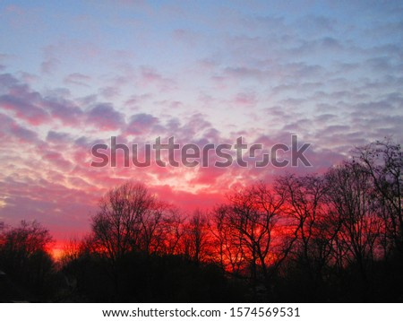 Silhouettes of trees during sunset. #1574569531