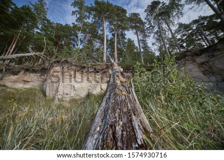 Storm damage. Toppled trees in the forest after a storm. Royalty-Free Stock Photo #1574930716