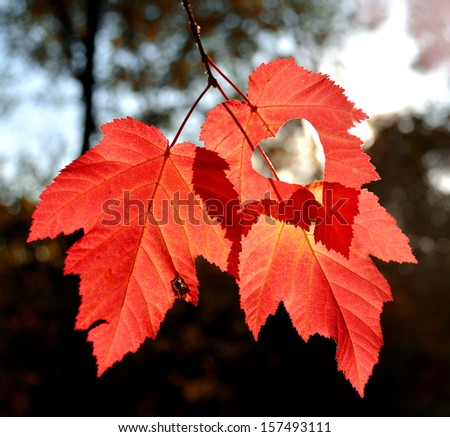 Three autumn leaves with heart #157493111