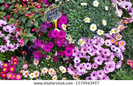 Various colorful bright garden flowers on the counter in the market #1574963497