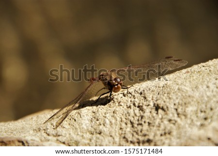 DRAGONFLY macro pic of insect