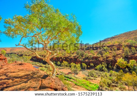Finke Gorge National Park in Northern Territory, Central Australia Outback. Ghost gum growing from a sandstone cliff in Palm Valley with ancient forest of Red Cabbage Palm. Aerial view landscape. Royalty-Free Stock Photo #1575239113