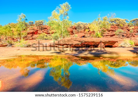 An ancient forest of Red Cabbage Palms reflected on permanent waterhole in heart of Palm Valley, dry season in Finke Gorge National Park. Outback Safari in Northern Territory, Central Australia. Royalty-Free Stock Photo #1575239116