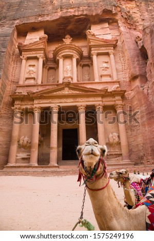 Portrait of a camel for transporting tourists in the archaeological area of Petra, Jordan. #1575249196