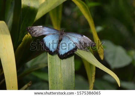 THE big blue winged butterfly #1575386065