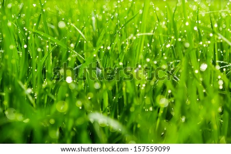background of dew drops on bright green grass #157559099