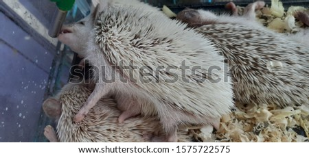 European hedgehog , also known as the West European hedgehog or common hedgehog, is a hedgehog species found in Europe. but i take the picture in Asia
