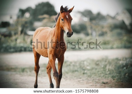 A handsome proud young colt stands near a country road unsaddled and free #1575798808