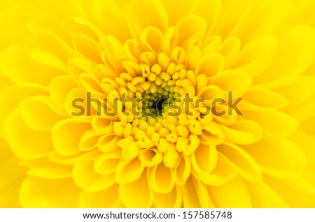 Close-up Yellow flower #157585748