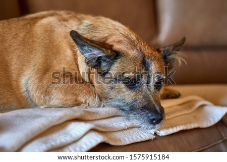Cute small dog on the couch #1575915184