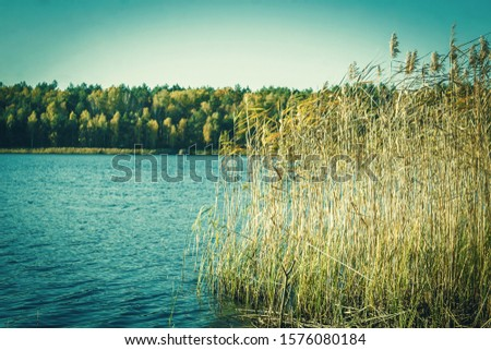 Autumn forest near lake shore. Reeds on the shore. Lake Shore #1576080184