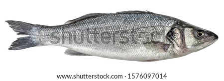 Fish sea bass isolated. Side view Royalty-Free Stock Photo #1576097014