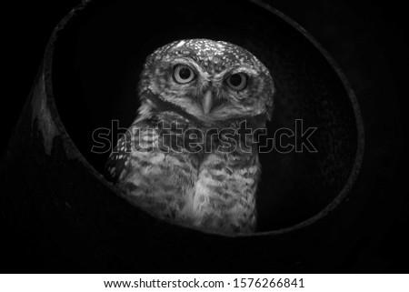 Beautiful portrait of an owl on dark background