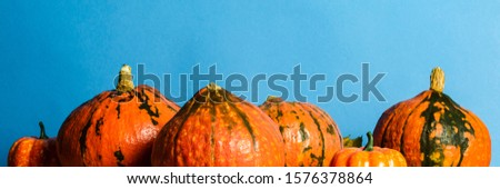 Ripe Pumpkins on a blue background. Harvest concept, Thanksgiving day, cook food, autumn. Banner #1576378864