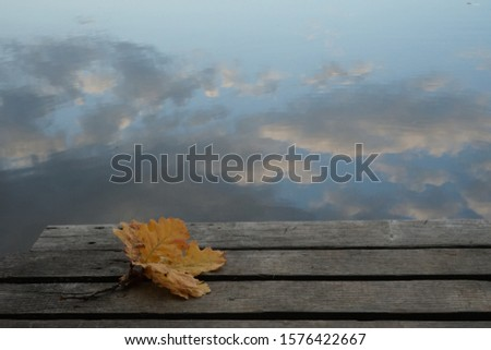 A sprig of oak leaves on a pier against the background of water in which the sky and clouds are reflected #1576422667
