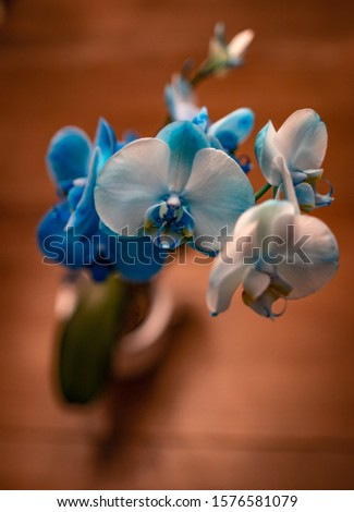 Orchid exotic flower blue white