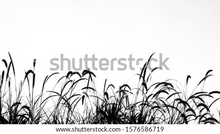 Background image silhouete of grass flowers.