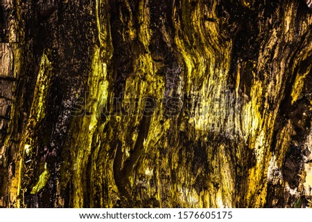 The old wood texture with deep natural patterns and cracks on the surface. Abstract photo editing with gold shades. Can be used as background. #1576605175