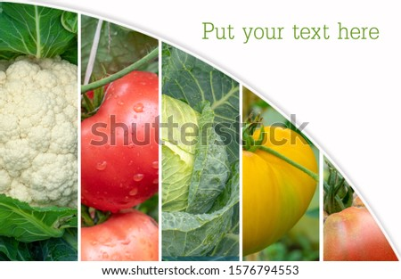 collage of healthy and fresh vegetables. Healthy eating: Green young grapes, White cabbage, Cauliflower, Red, yellow tomato. mockup, Space for text, #1576794553