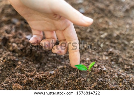 Hands touching young green plant on garden with sunlight. Eco earth day concept. Eco friendly. Save the planet. #1576814722