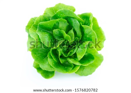 green butter lettuce vegetable or salad isolated on white back ground with clipping path #1576820782
