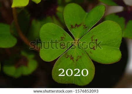 New year wishes with a lucky clover #1576852093