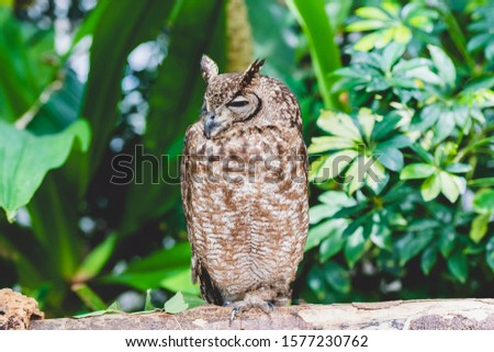 Owl resting on a tree and resting #1577230762