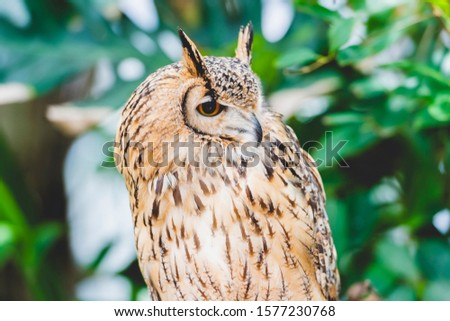 Owl resting on a tree and resting #1577230768