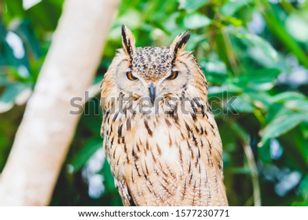 Owl resting on a tree and resting #1577230771