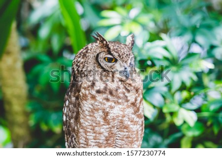Owl resting on a tree and resting #1577230774