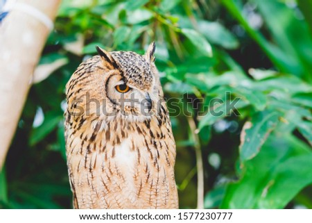 Owl resting on a tree and resting #1577230777