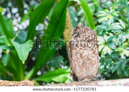 Owl resting on a tree and resting #1577230783