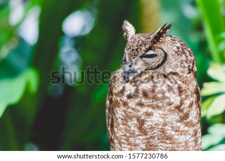 Owl resting on a tree and resting #1577230786