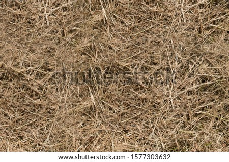 Hay texture. Hay bales are stacked in large stacks. Harvesting in agriculture. #1577303632