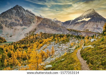On the way hike up to Odaray viewpoint, looking back at Mount Schaffer and Part Mountain, against a beautiful golden larches background.  This is part of the Lake O'Hara hiking circuit. #1577353114