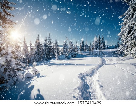 Frosty day in snowy coniferous forest. Location place of Carpathian mountains, Ukraine, Europe. Magnificent wintry wallpapers. Christmas holiday concept. Happy New Year! Discover the beauty of earth. #1577410429