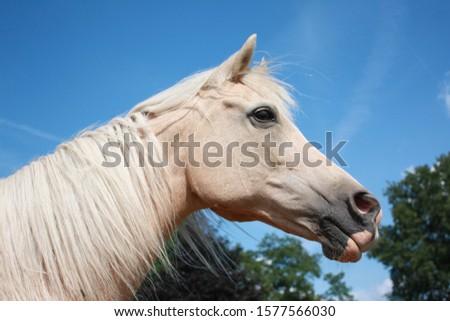Beautiful portrait of a palomino horse #1577566030