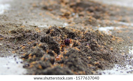 small colony of ants, anthill with red fire ants