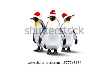 Three Emperor Penguins In New Year Helper Hats Isolated On White Background. New Year And Christmas Celebration Theme. Penguins Are In A Row