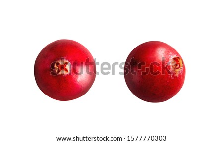 Cranberry. Cranberrys isolated on white background. Full depth of field. Macro, top view of cranberry #1577770303