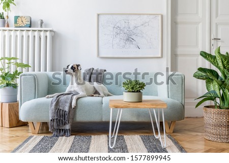 Stylish scandinavian living room interior of modern apartment with mint sofa, design coffee table, furnitures, plants and elegant accessories. Beautiful dog lying on the couch. Home decor. Template. #1577899945