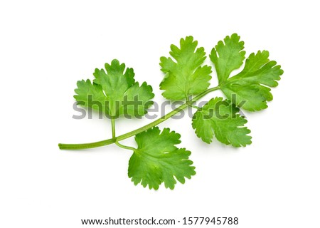 Flat lay (Top view) of fresh coriander leaves isolated on white background. #1577945788