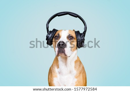 Dog in noise cancelling headphones, blue isolated background. The concept of pets being afraid of loud noises or fireworks #1577972584
