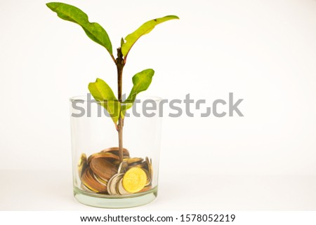 green plant grows from a pot of coins. Growing business investment. #1578052219